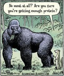 Wegetarianizm - czy dostarczam ciału wystarczająco białka?