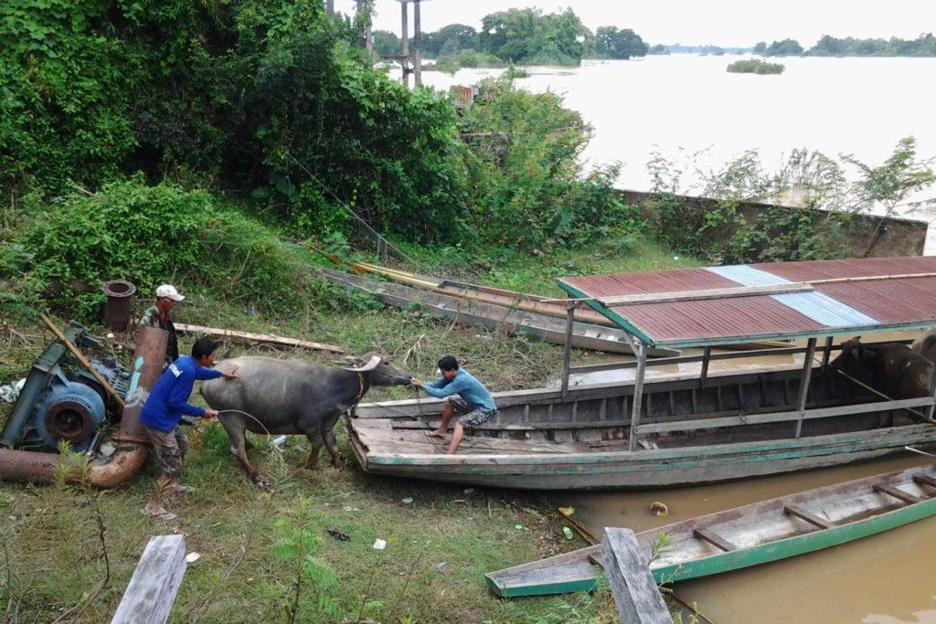 Ostatni dzień niepodległości Laotańskiej Republiki Olewki i Luzu. Laos Don Det Mekong