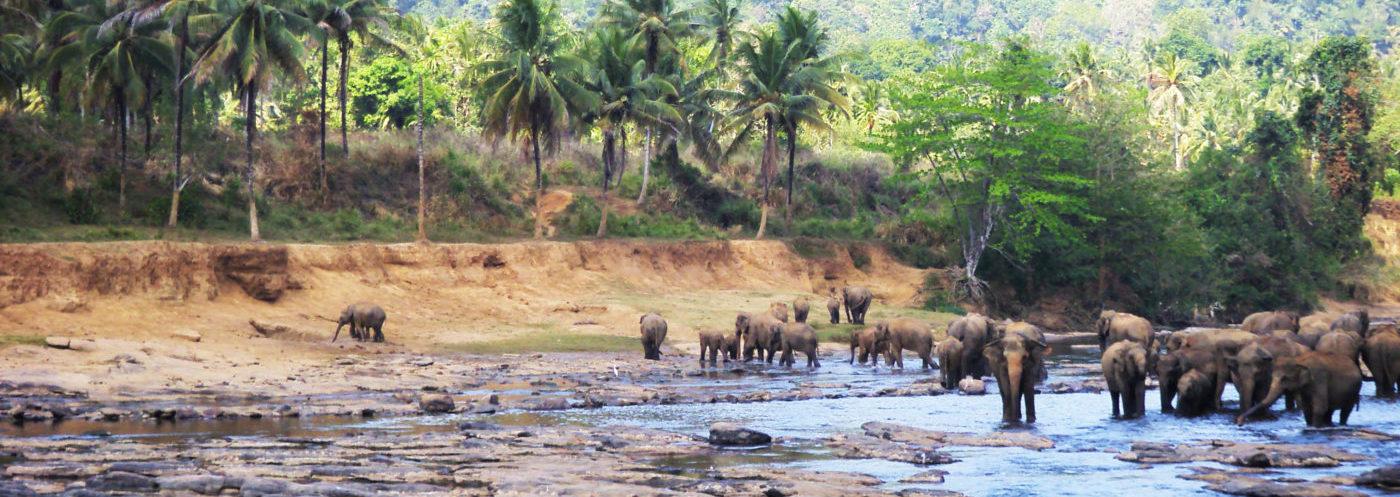 Wyjazd - Joga i Ajurweda na Sri Lance